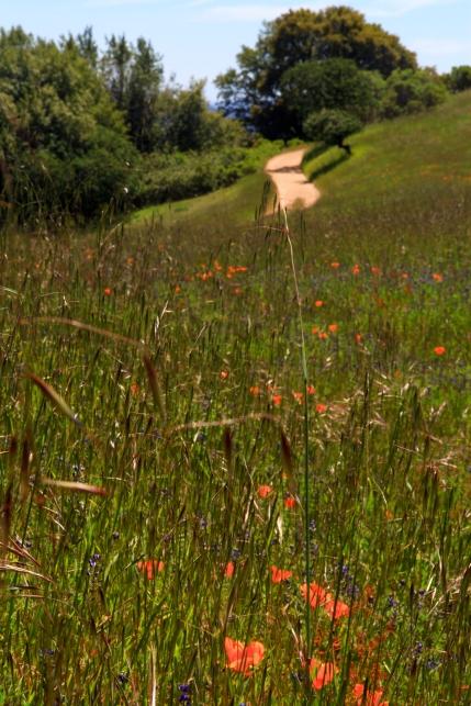 Plants in Bear Valley, Pt Reyes and later near Azalea hill trailhead in the marin municipal water dirstrict near Fairfax, CA