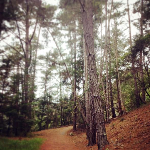The Dip Sea trail in Muir Woods