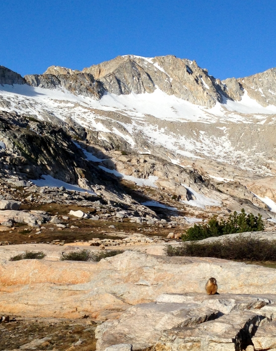 The true mountain climbers.. Marmot !