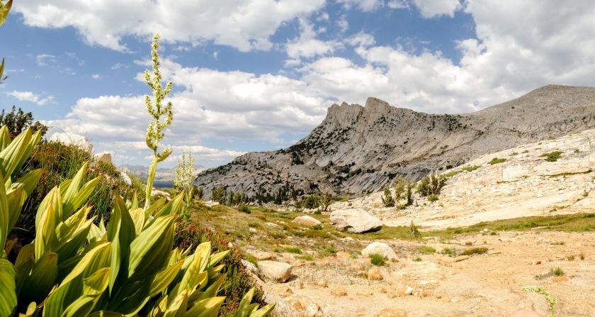 Veratrum californicum (Corn Lily) blooming with Unicorn peak in the background.
