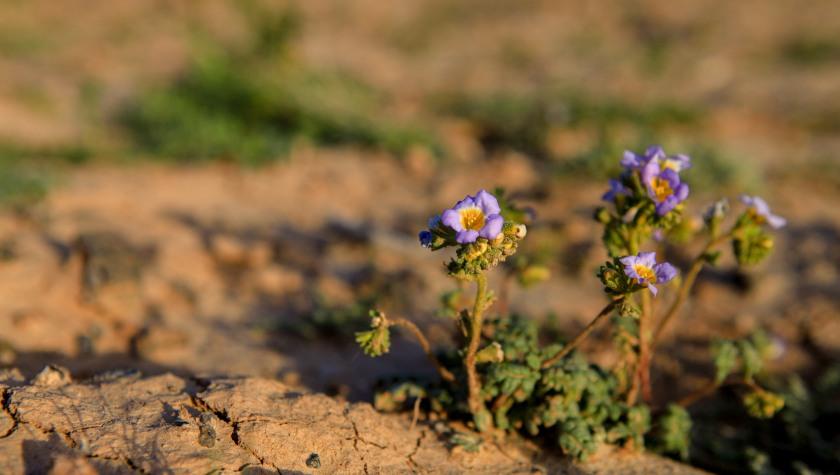 shoshoneflowers_022216_hodzic_050-2